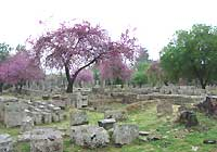 The archaeological site of Olympia